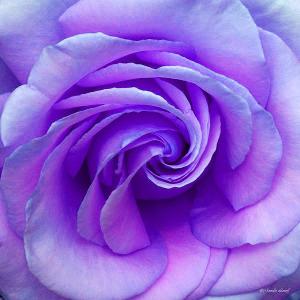 love-spiral
