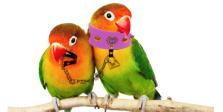 lovebirds_01l